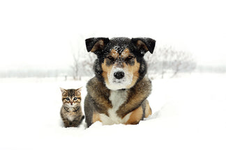 image Winter Safety Tips for Your Pets