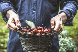 image Healthy Ingredients for Your Pet: Cherries
