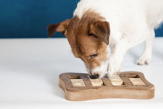 image Can You Measure Your Dog's Intelligence?