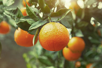 image Healthy or Not So Healthy Ingredients for Your Pet: Citrus
