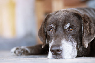 image for Petnet Health Series: Arthritis