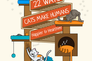image for 22 Ways Cats Make Humans Happier & Healthier