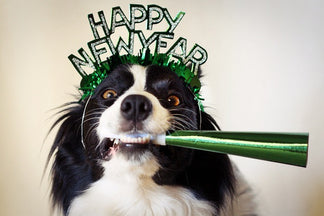 image for New Year's Resolutions: Feed Your Dog Better