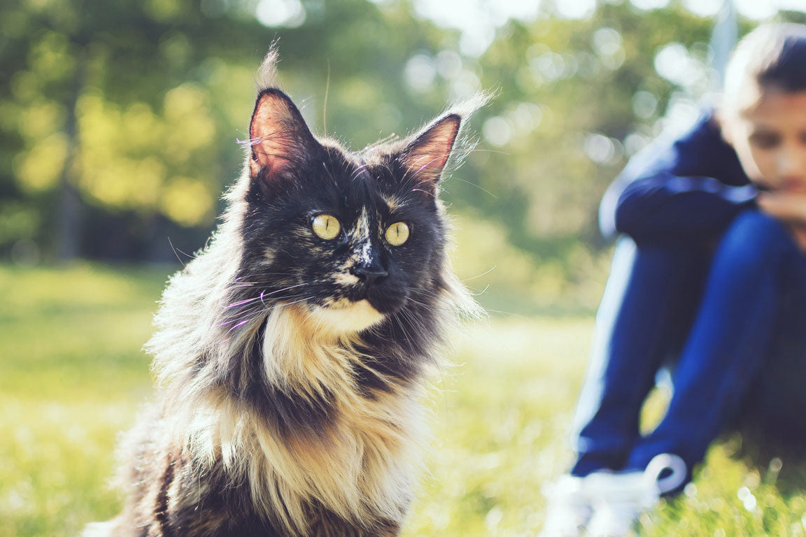123-4-maine_coon