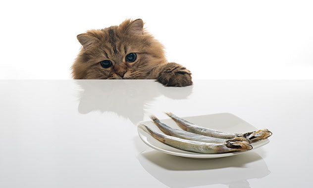 140826 Cat with Fish