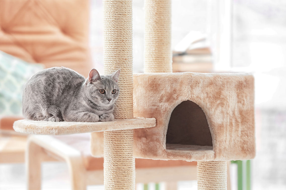 Some Owners Think That The Best Remedy Is To Have Their Cats Declawed. That  Is Seen By Most Veterinarians As A Drastic As Well As An Unnecessary And ...
