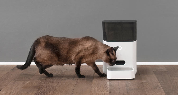 Automatic Feeder for Cats and Dogs