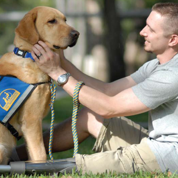 Assistance Dogs 2