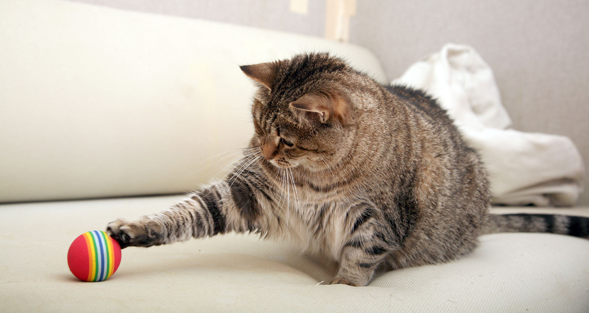 Blog_Exercising-Cats