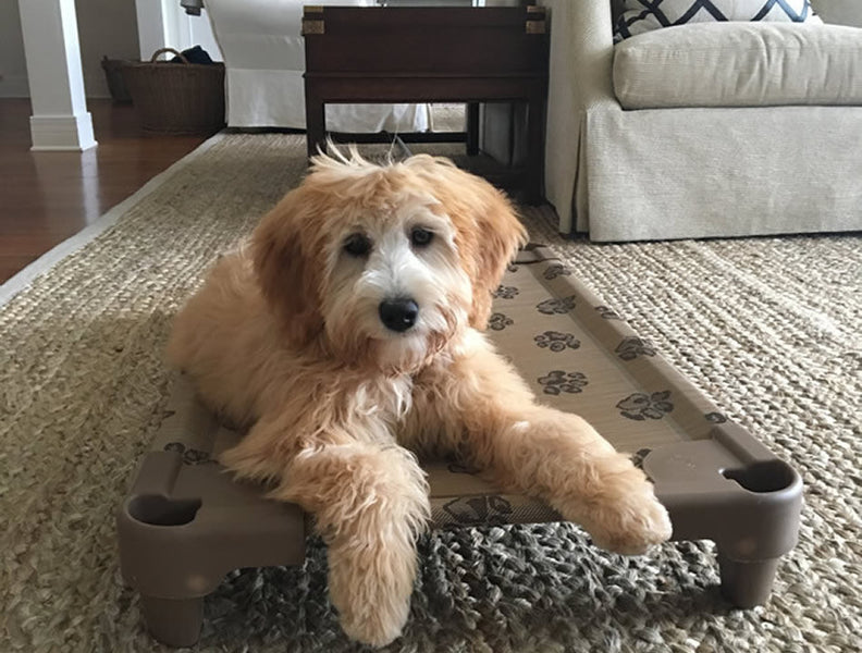 raised dog beds elevated dog beds petcot raised dog beds the petcot company