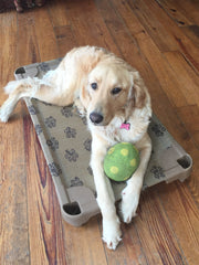 Medium Raised Dog Bed