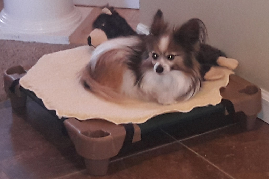 Small Raised Dog Bed