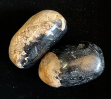 Palm Root Tumbled Healing Stone