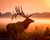 Elk on Foggy Morning (0001)