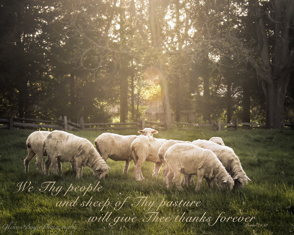 Flock of sheep in meadow with scripture verse