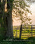 Sunburst through old tree and gate in Kansas with scripture verse