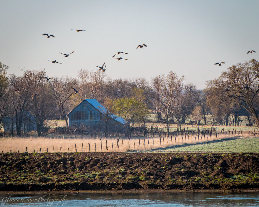 Old farm and birds beside river in Kansas
