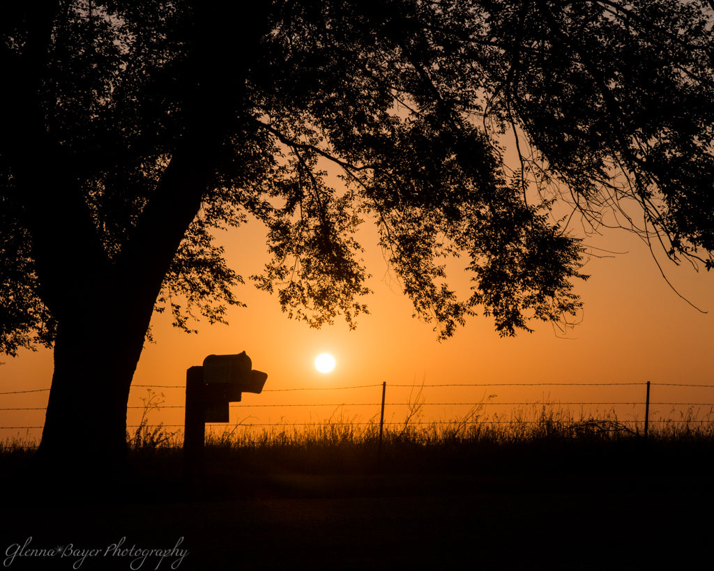 Silhouette of tree and mailbox against an orange sunset in Douglas County, Kansas