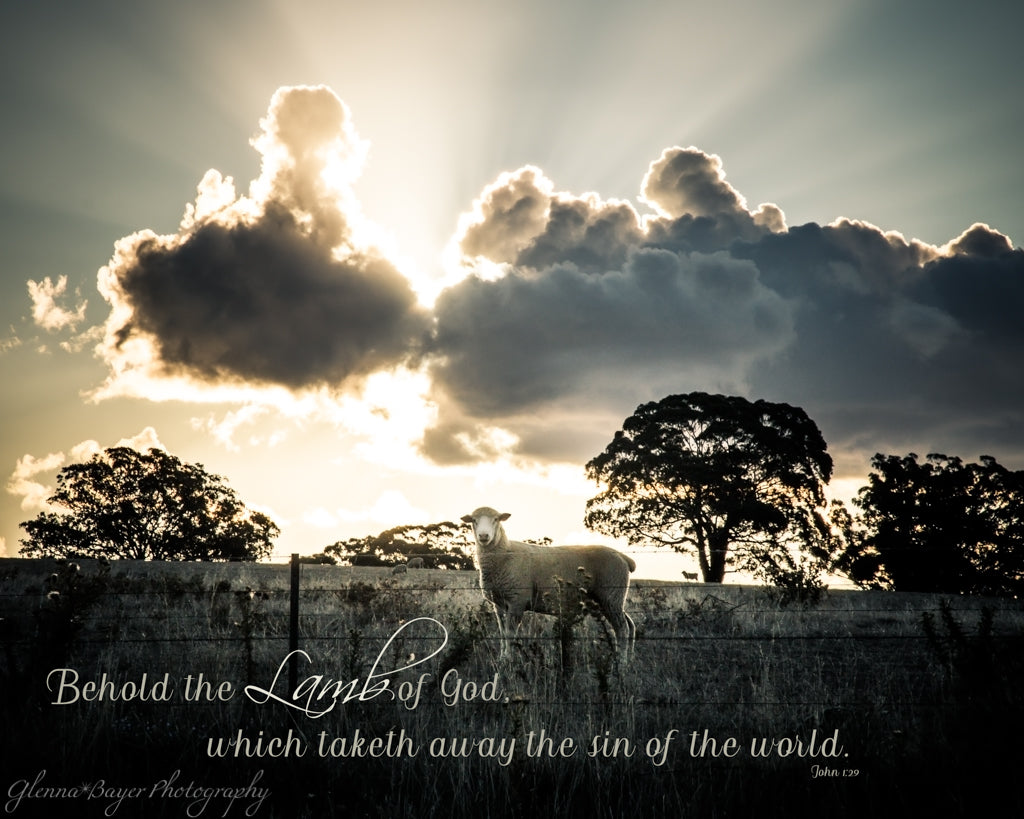 Sheep standing in pasture and dramatic clouds during sunset in Australia with scripture verse
