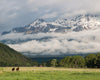 Grand Tetons, Mountains, Snow, Field, Grass, Horses, Clouds, Green, Blue, Gray
