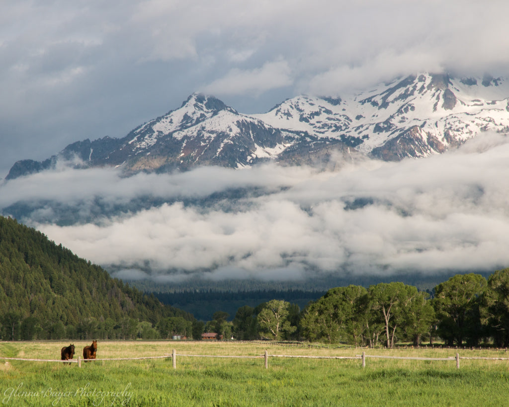 Horses in pasture at the Grand Teton National Park