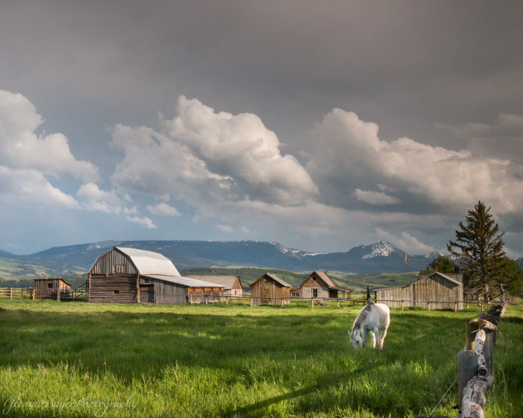 Horses and barns in the Grand Teton National Park