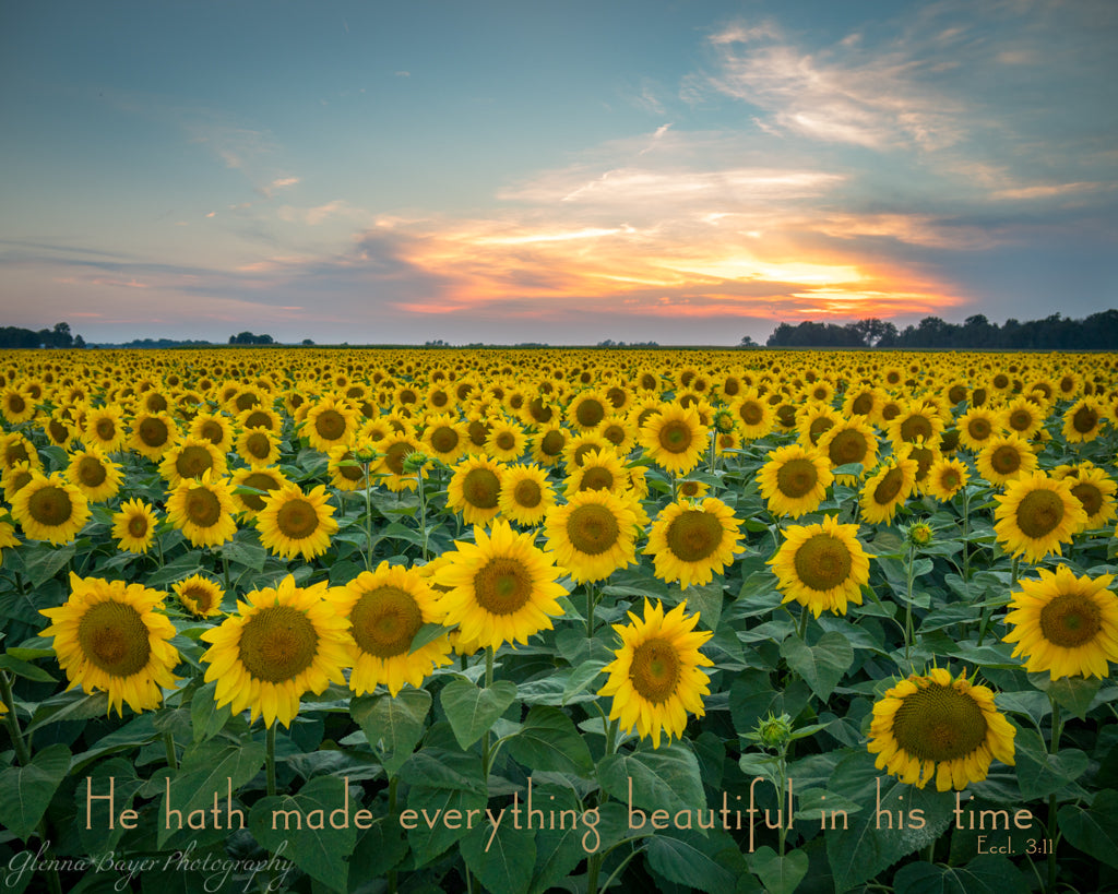 Large field of sunflower during sunset with scripture verse