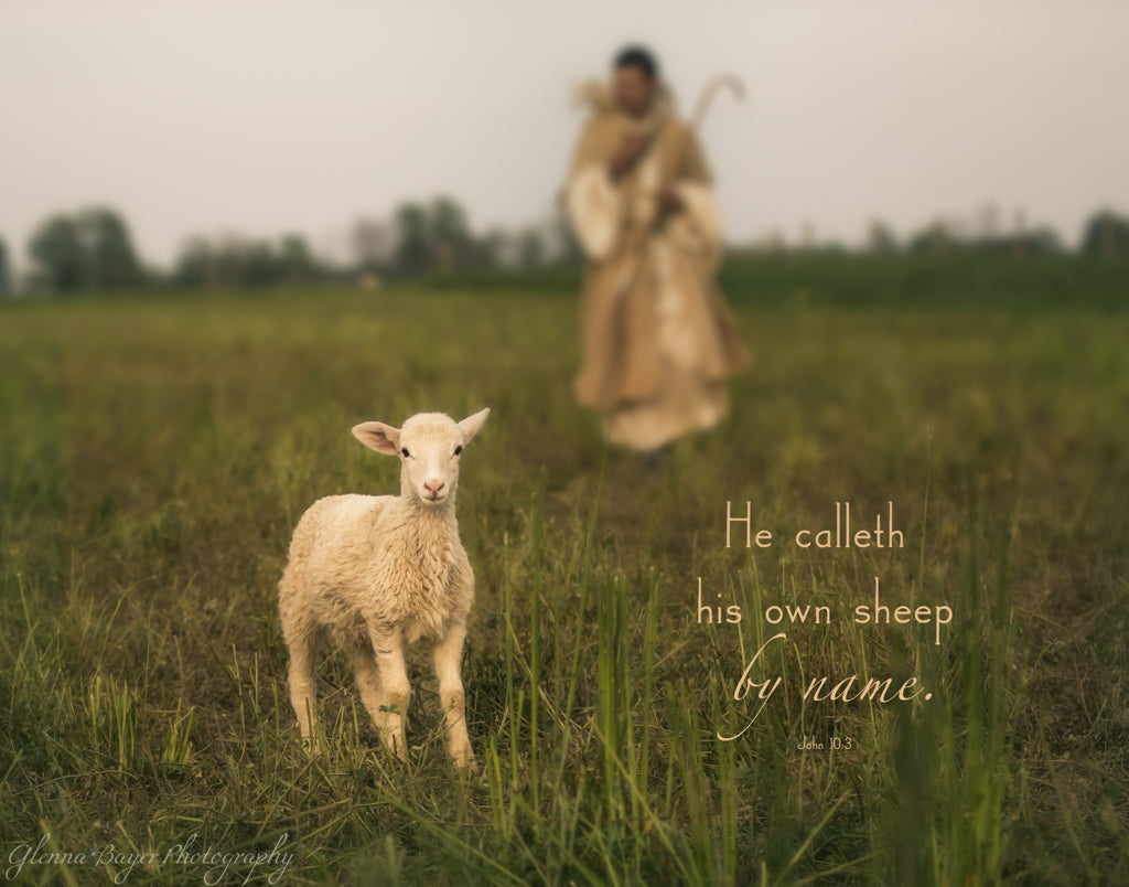 Shepherd with staff carrying little lamb on shoulders and guiding lamb with scripture verse