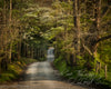 Spring in the Smokies, Green, Path, Bible Verse