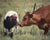 Brown mother cow and white and brown calf touching noses in a grassy field in Kansas