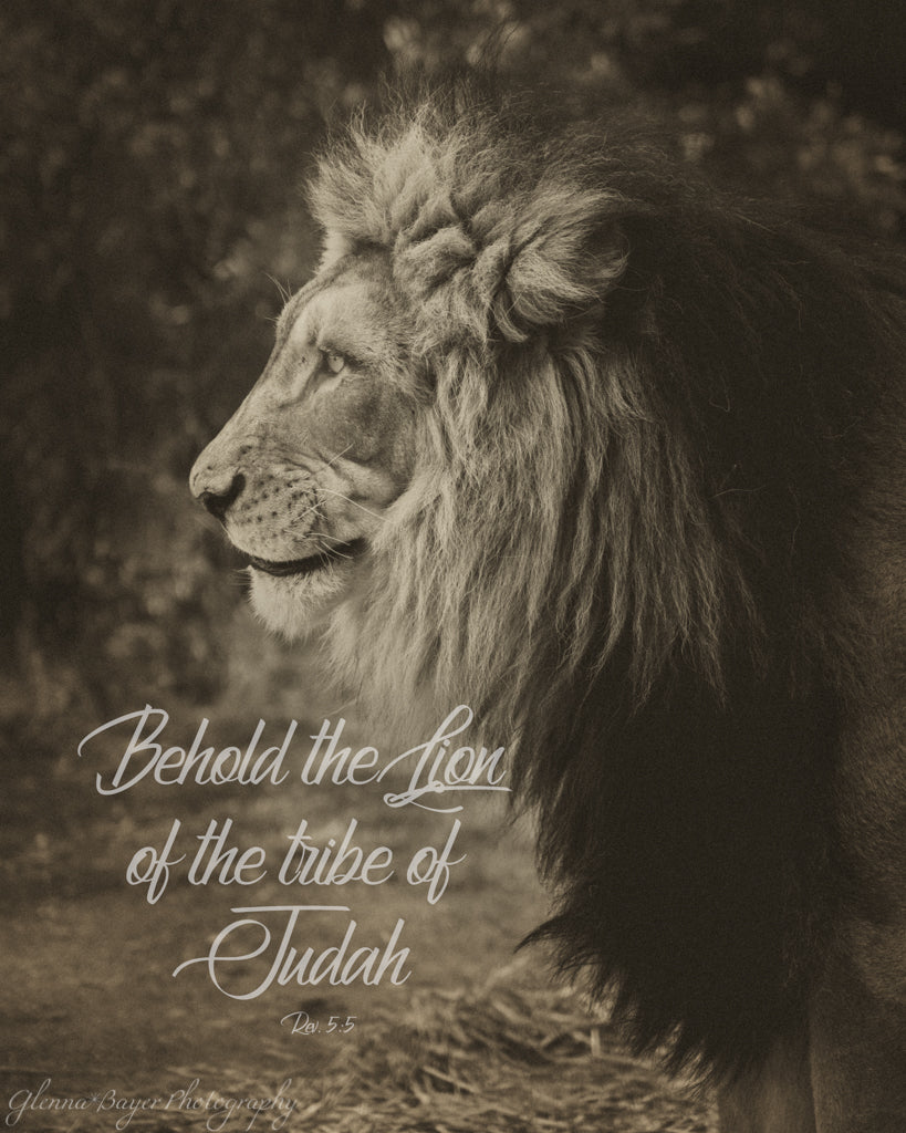 Lion of Judah (0440-1)