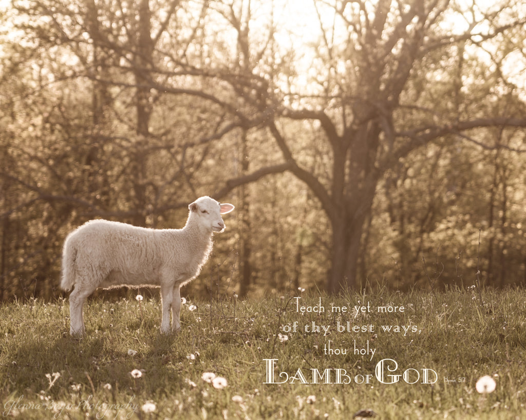 Little lamb standing in pasture at evening with scripture verse