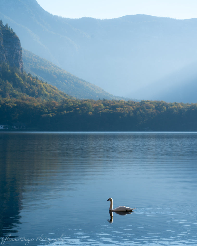 Swan on blue Lake in Hallstatt, Austria with blue mountains in background