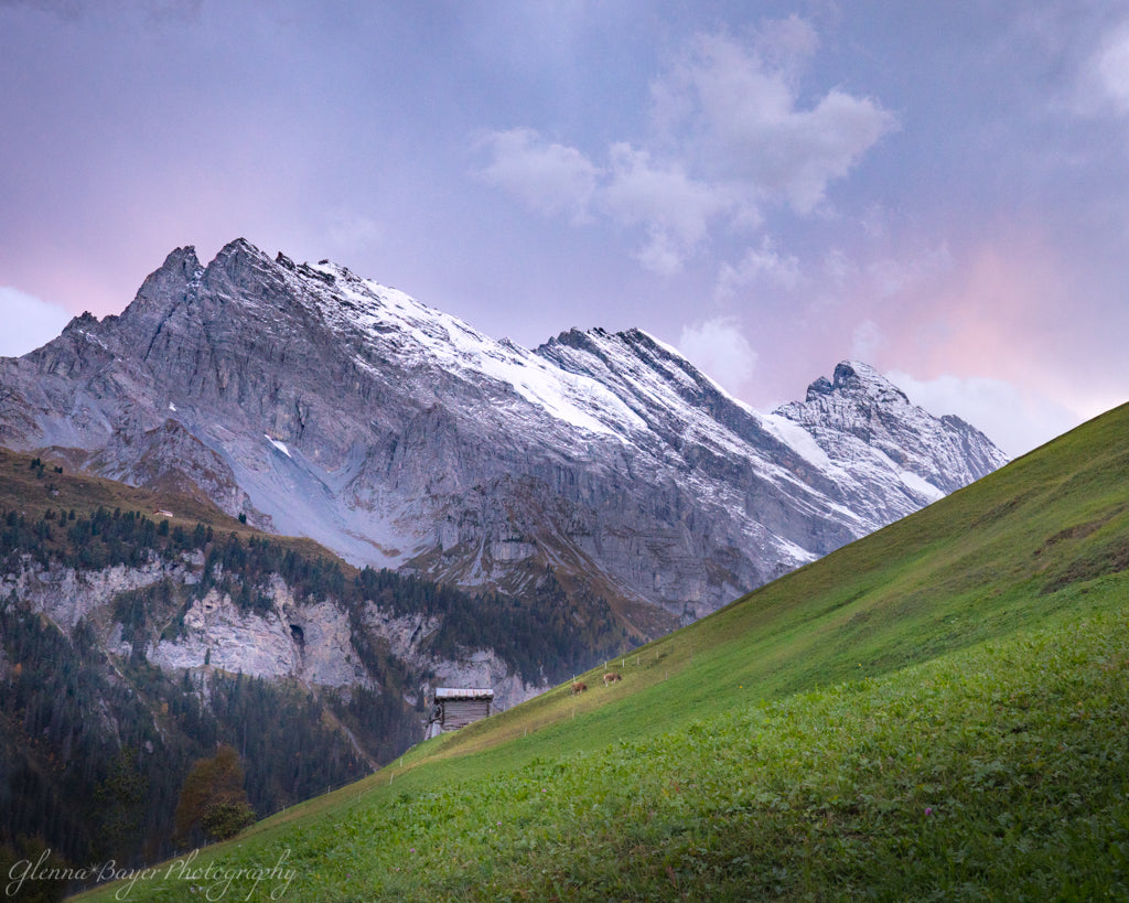 Pink and purple sunrise and the Swiss Alps in Gimmelwald, Switzerland