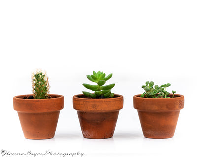 Three potted plants, a cactus and two succulents with white background