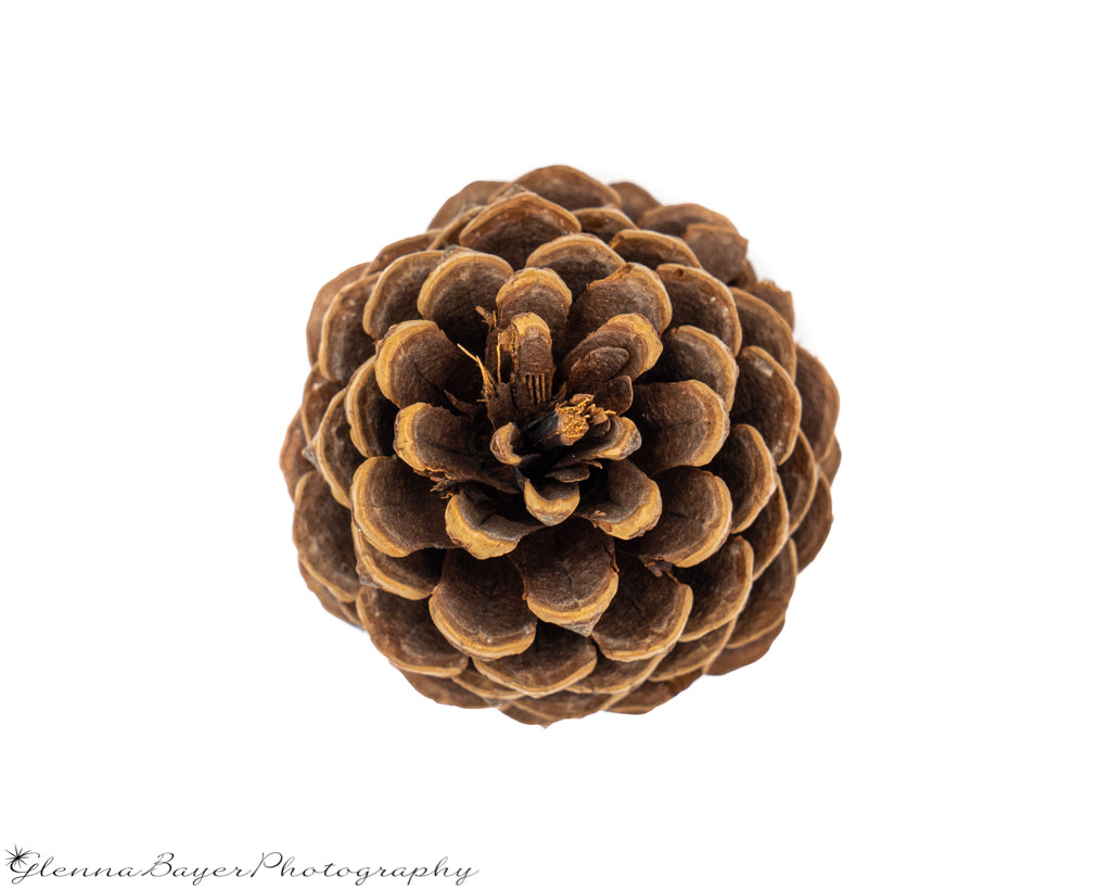 Straight over top picture of pinecone