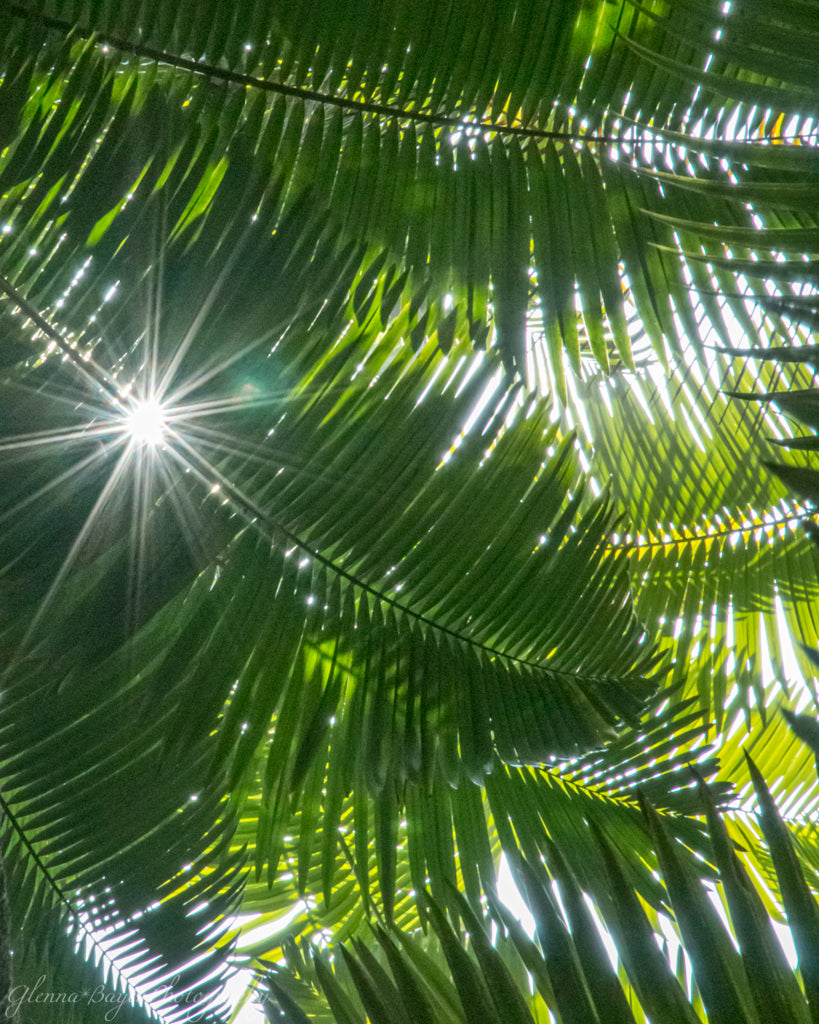 Hawaii Palm leaves with sunburst coming through