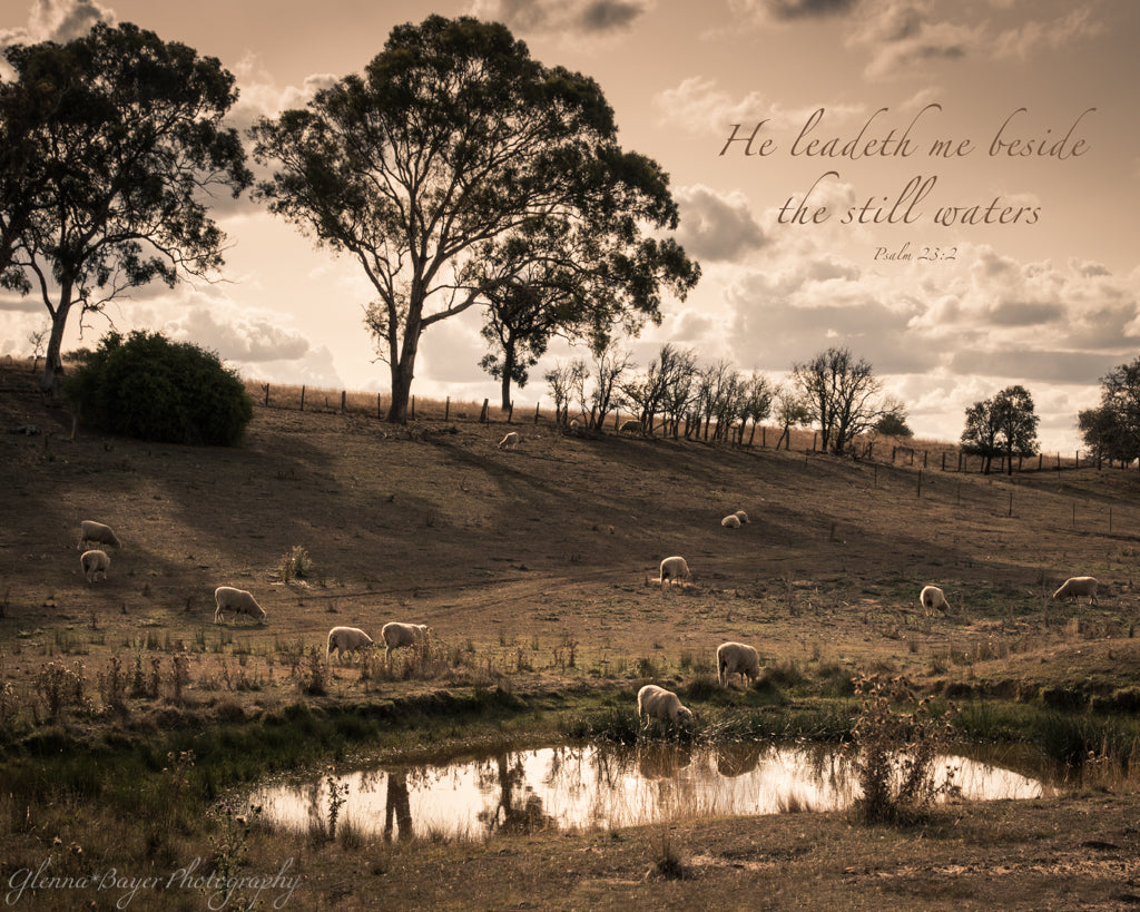 Sheep beside water in Australian landscape with scripture verse