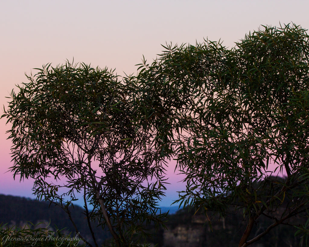 Silhouette of eucalyptus trees against an orange, pink, and blue sky in Australia