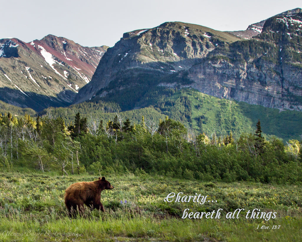 Black bear in Glacier National Park with mountains in background and scripture verse.