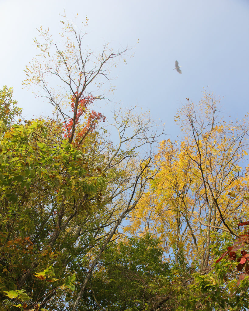 Bird flying about green, red, and yellow trees