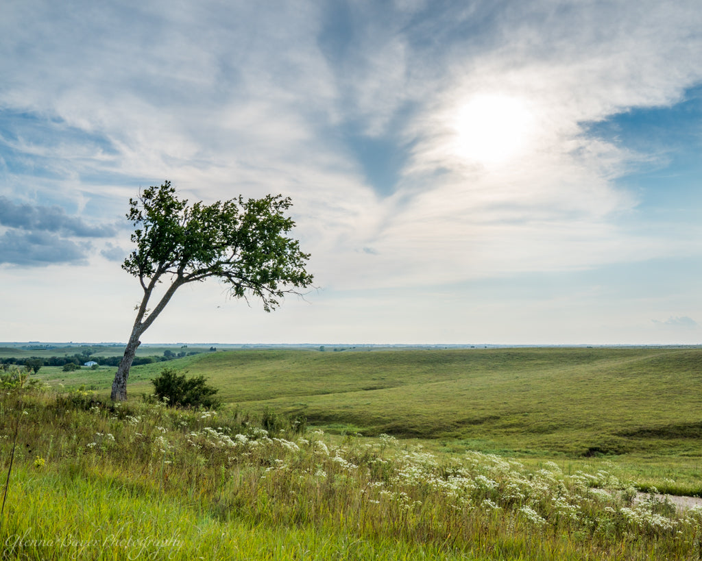 A green grassy landscape and lone tree in the Kansas Flint Hills