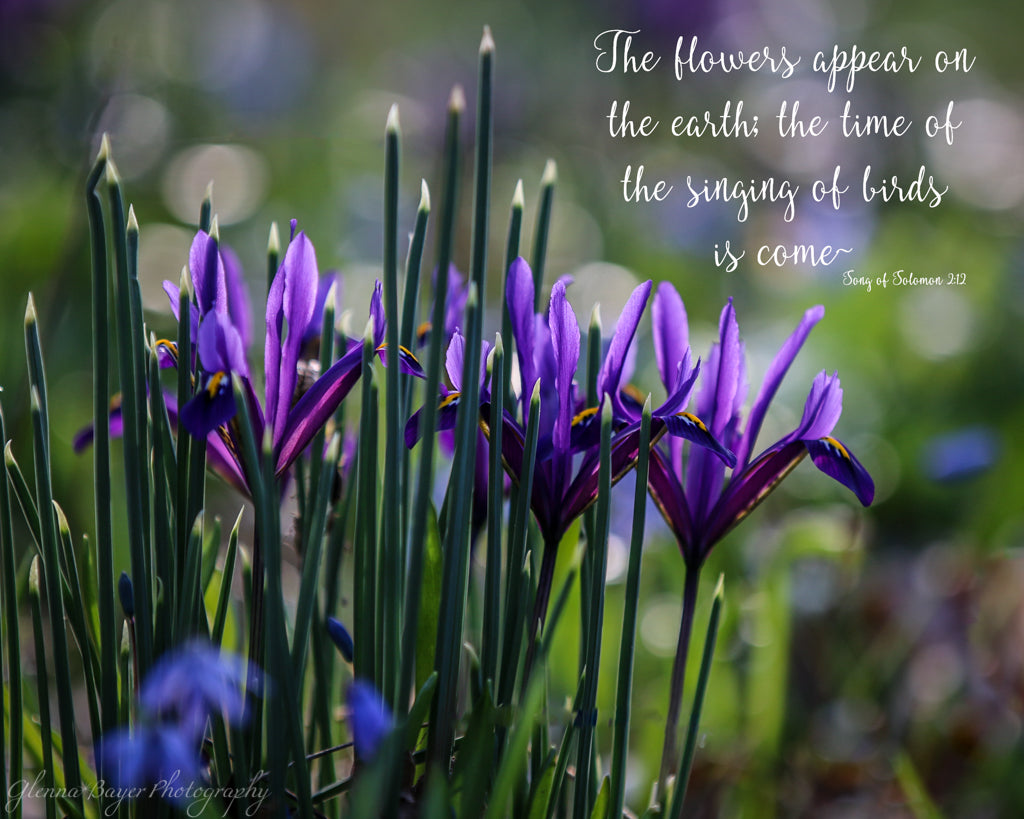 Purple springs flowers at the Aullwood Center in Ohio with scripture verse