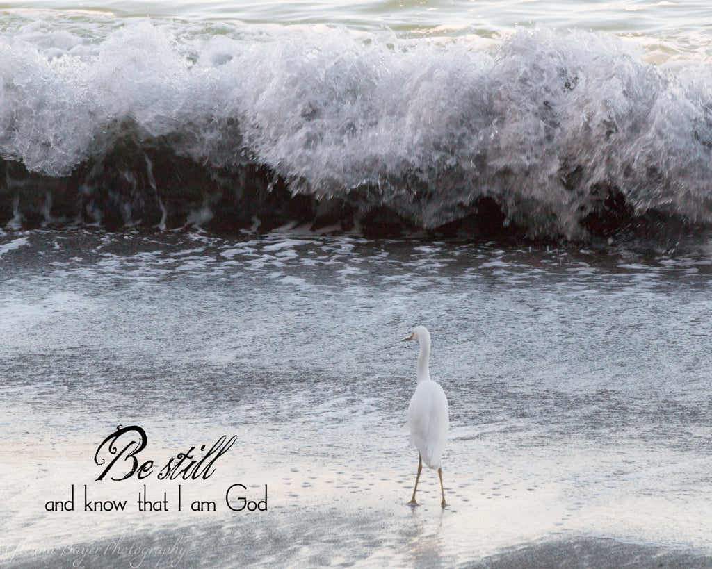 White bird standing in ocean wave with bible verse