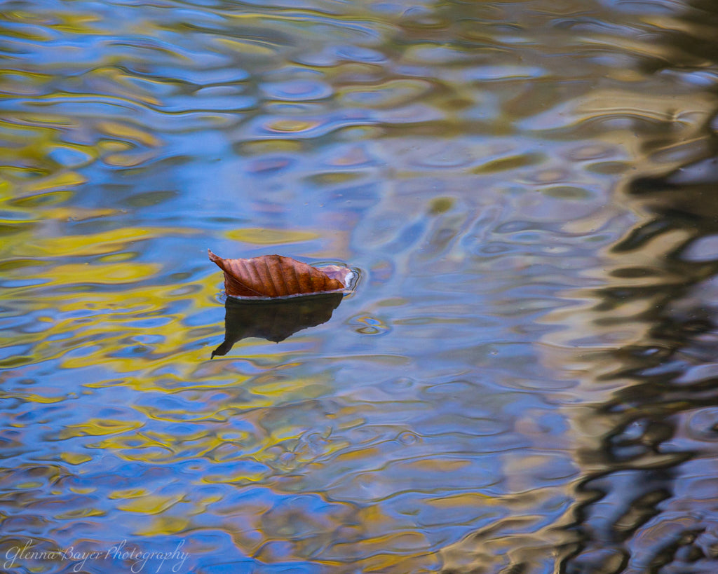Fall abstract of leaf in Blackwater River