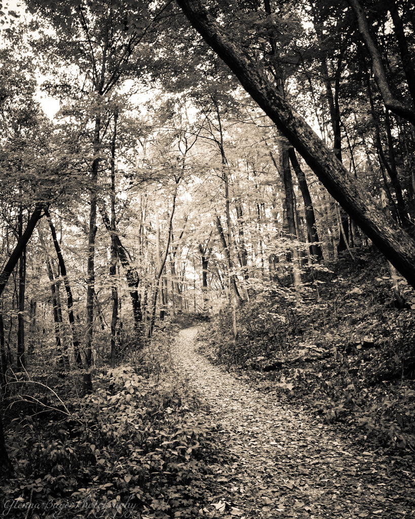A trail through the woods at Brukner Nature Center, Ohio.