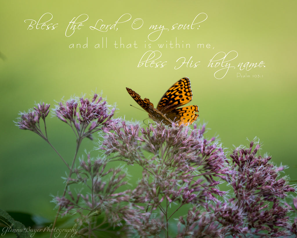 Orange butterfly on Joe Pye Weed with scripture verse