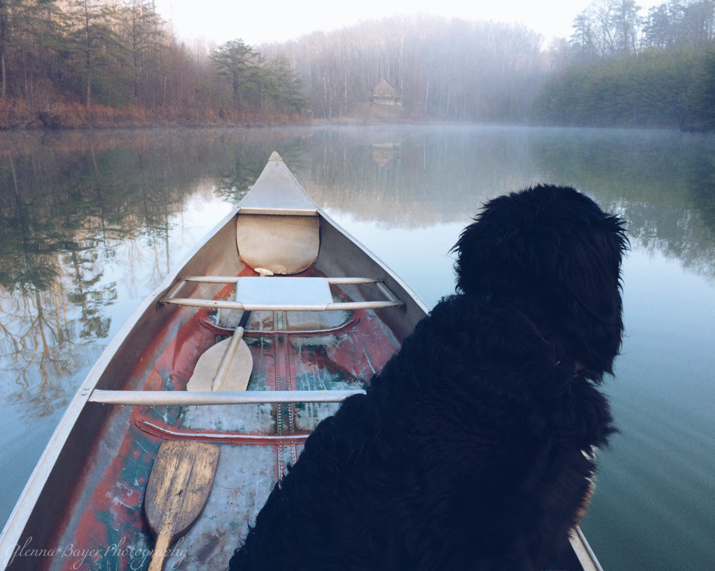 Black dog in old canoe on pond during foggy morning