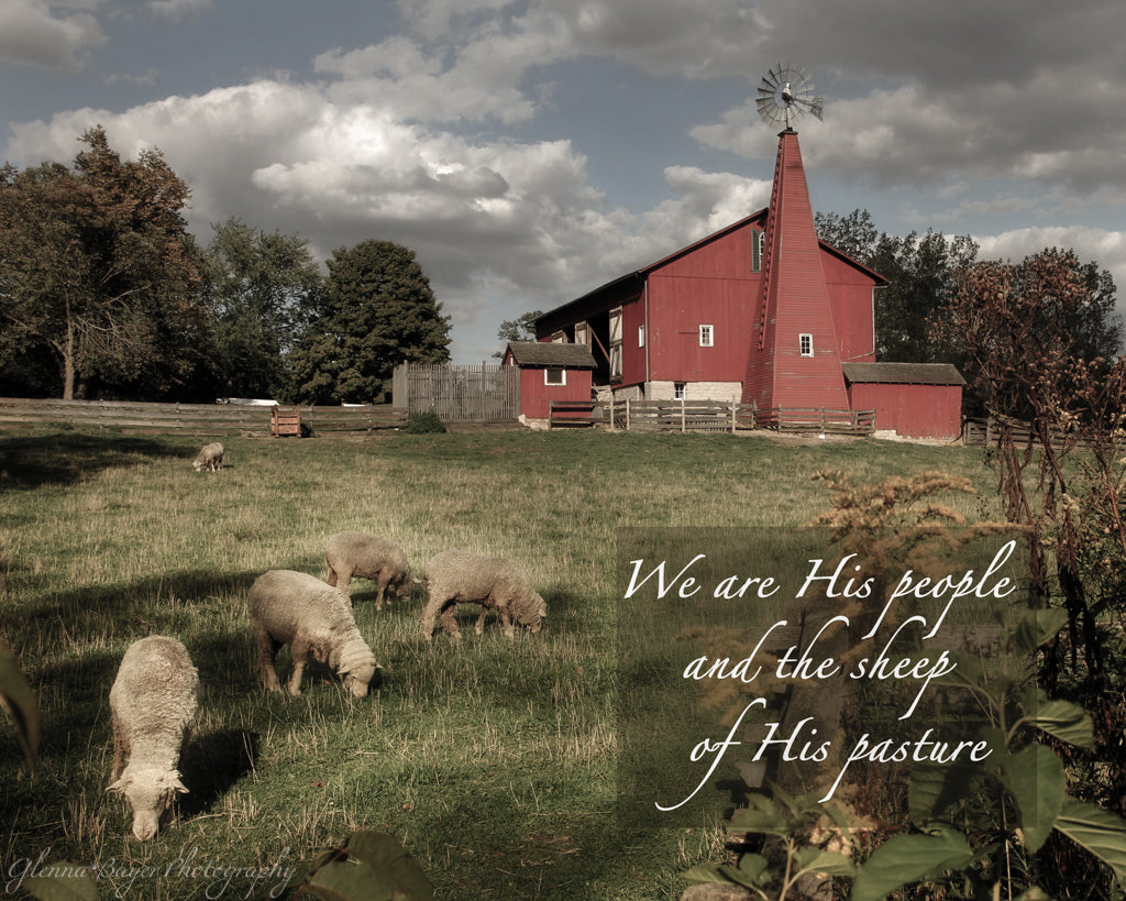 Flock of sheep and red barn with scripture verse