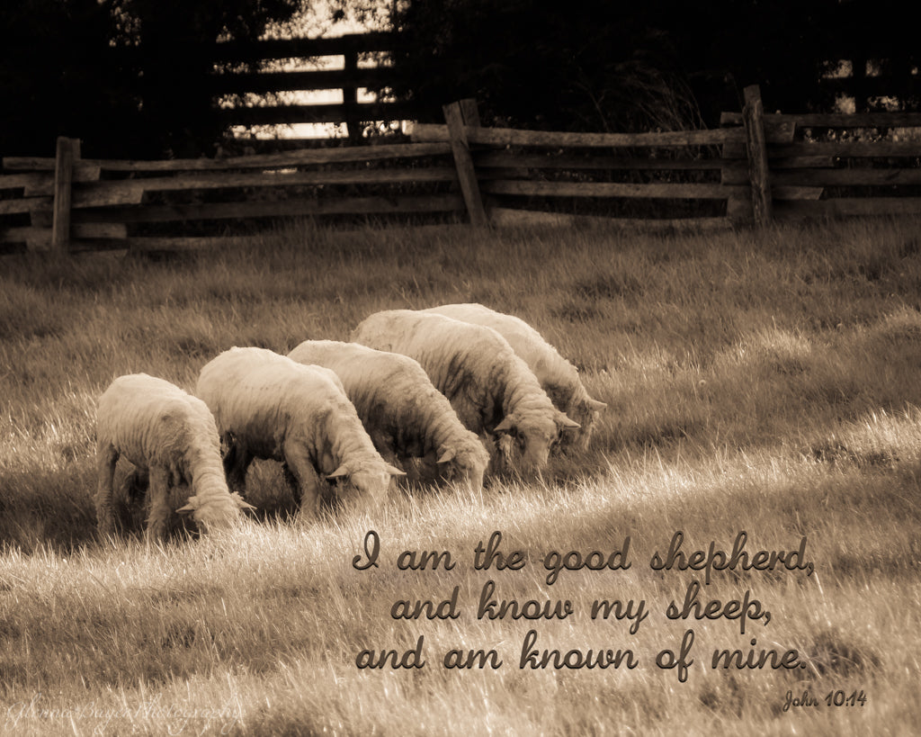 Flock of sheep in pasture with scripture verse